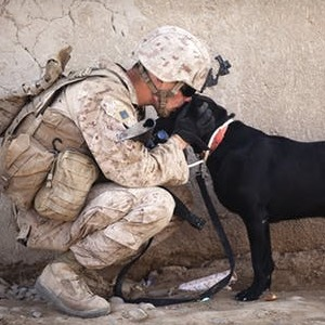 soldier-dog-companion-service2